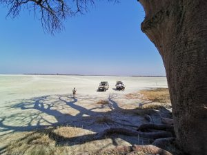 Baine´s Baobab Trees im NXAi National Park / Botswana